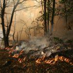 Code rood: aanhoudende hitte risico voor natuur en spoor