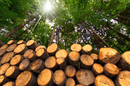 houten woontorens