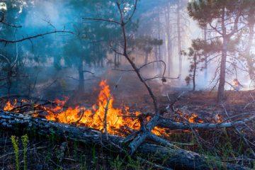 Bosbranden rondom Berlijn