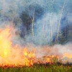 Ruim twee keer zoveel natuurbranden in juni en juli