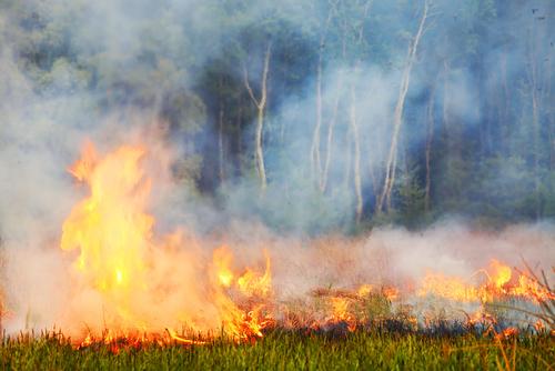 Heidebrand in Duitsland